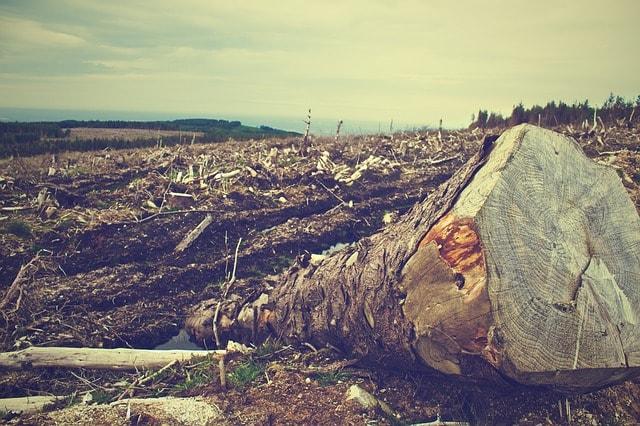 causes-of-deforestation-logging