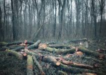 How Does Deforestation Affect Climate Change?