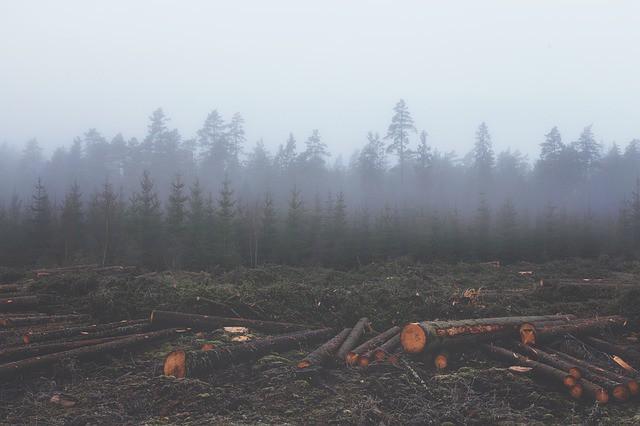 effects-of-deforestation