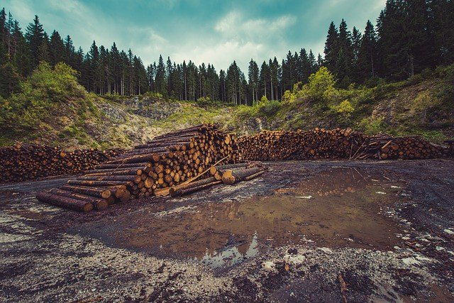 solutions-to-deforestation