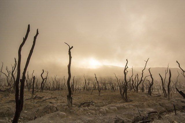 dead-trees-dry-deserted-dead-wood-drought