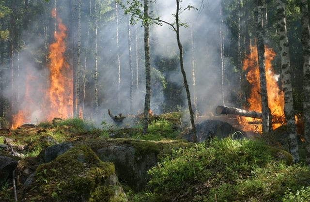 forest-fire-smoke-burning
