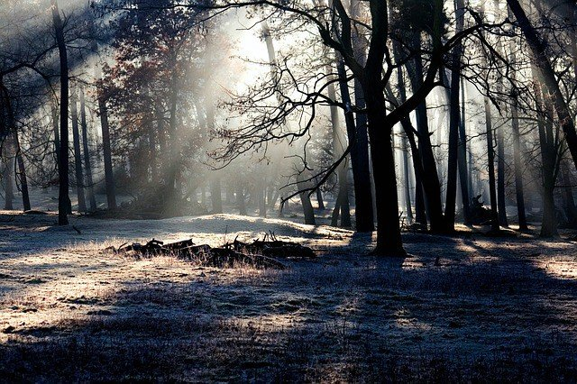 forest-light-mood-light-beam