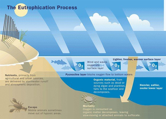 the-eutrophication-process