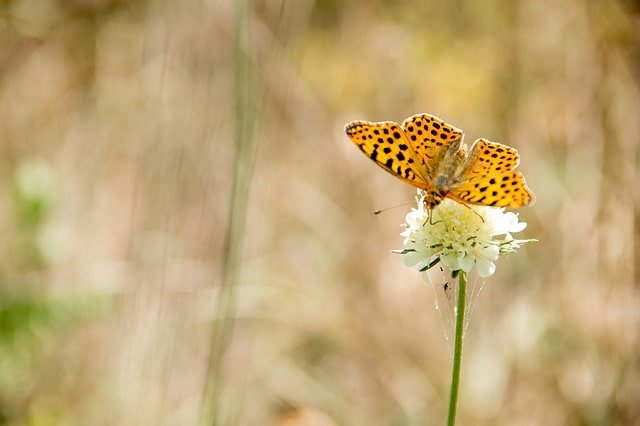 butterfly-nature-insect-animal
