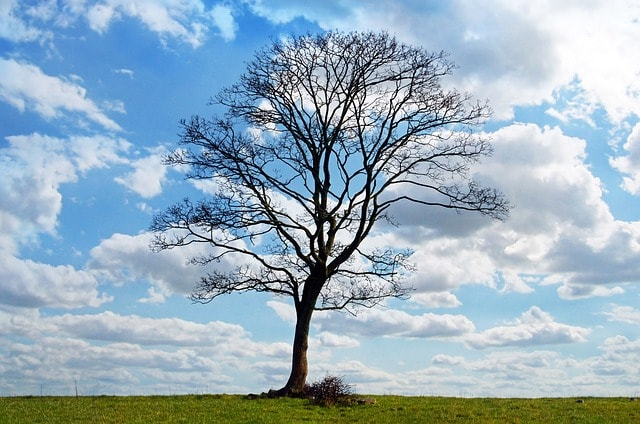 tree-blue-sky-branch-branches