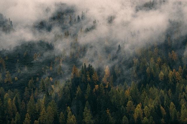 low-forest-rainforest-environment