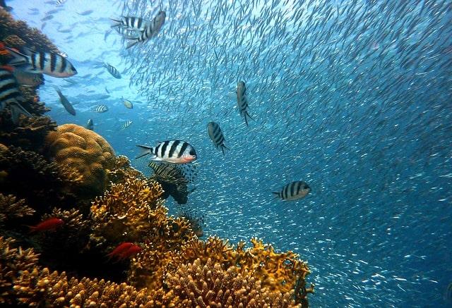 fish-underwater-diving-water