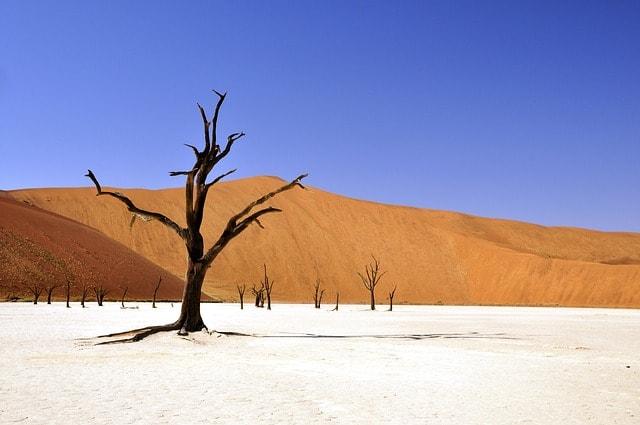 tree-desert-namibia-dead-vlei