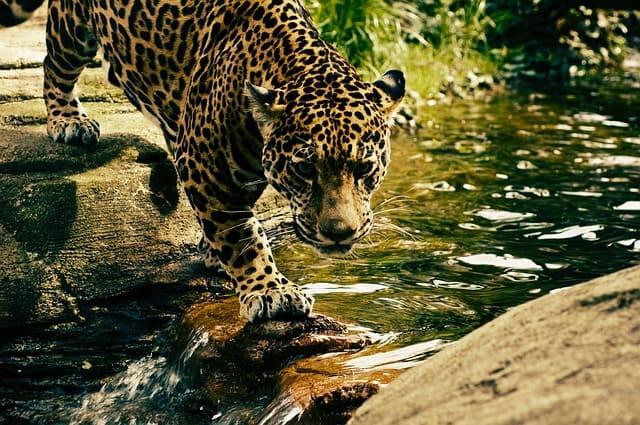 nature-landscape-animal-wildlife