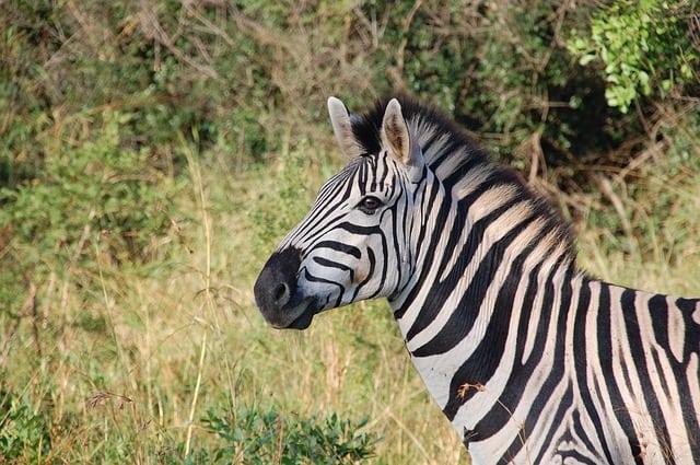 south-africa-wild-nature-wildlife