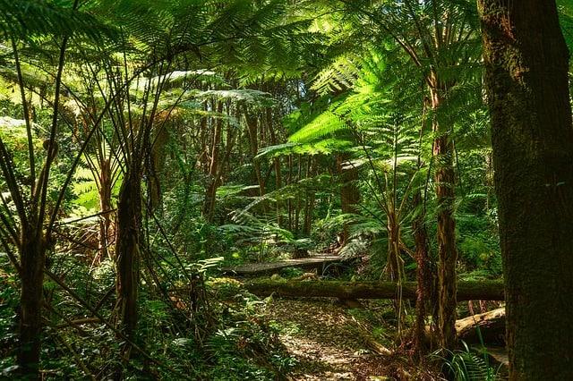 ferns-tree-ferns-australia-sydney