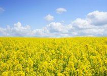 What is Monoculture? Various Advantages and Disadvantages of Monoculture