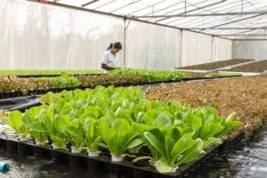 conservatory-agriculture-aquaculture