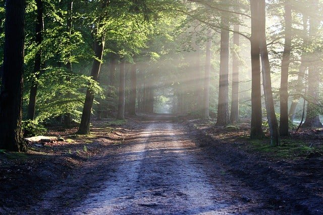 the-road-beams-path-forest-nature