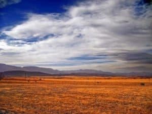 landscape-tree-nature-grass-horizon-wilderness