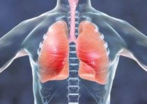 25+ Stunning Facts About the Human Respiratory System