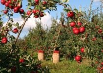 Permaculture Farming: Definition, Principles and Examples