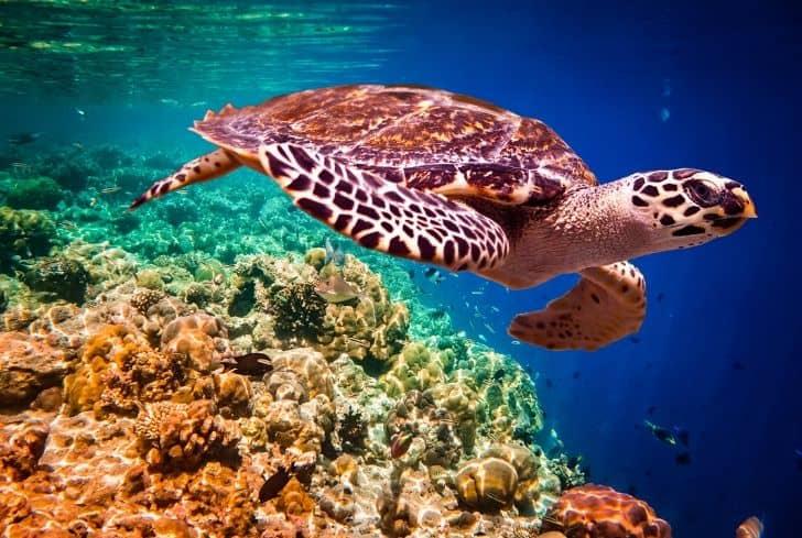 sea-turtle-water