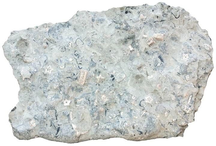 limestone-crinoid