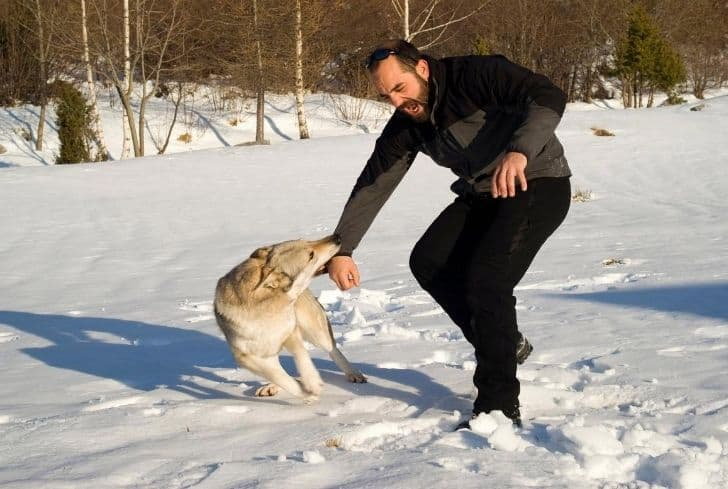 dog-attack-man-hand