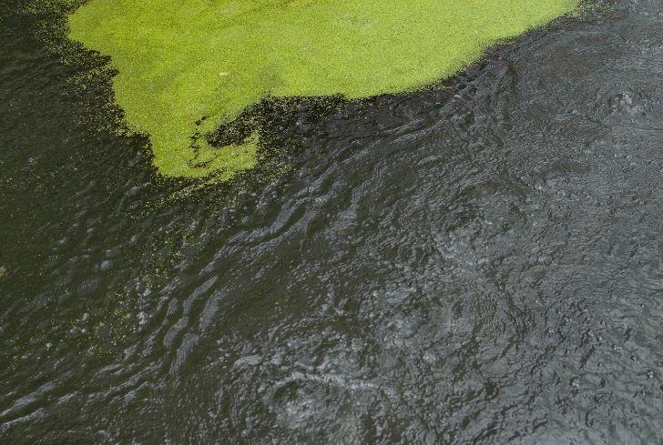 eutrophication-nutrient-pollution
