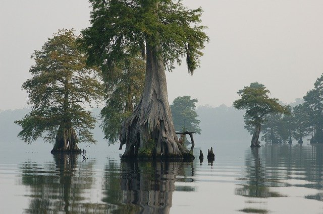 great-dismal-swamp-landscape-scenic