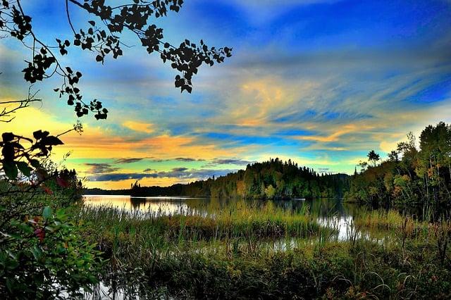 landscape-nature-trees-marsh-water