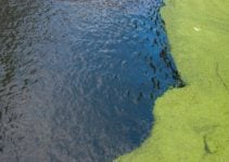 Nutrient Pollution: Causes, Effects and Interesting Solutions