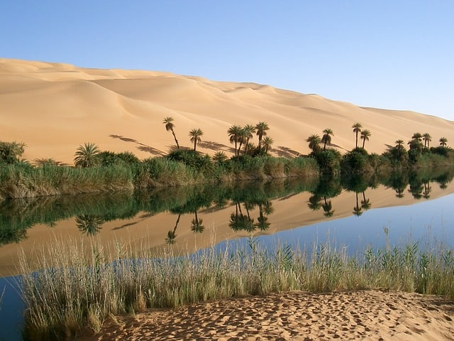 oasis-libya-desert-palm-trees