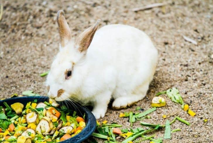 rabbit-eating-food