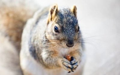 Can Squirrels Eat Almonds? (And Almond Butter)
