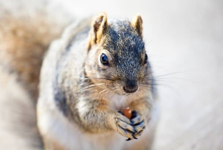 squirrel-eating-almond