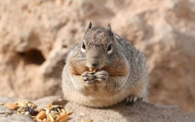Can Squirrels Eat Raisins? (And Can They Choke on Raisins)