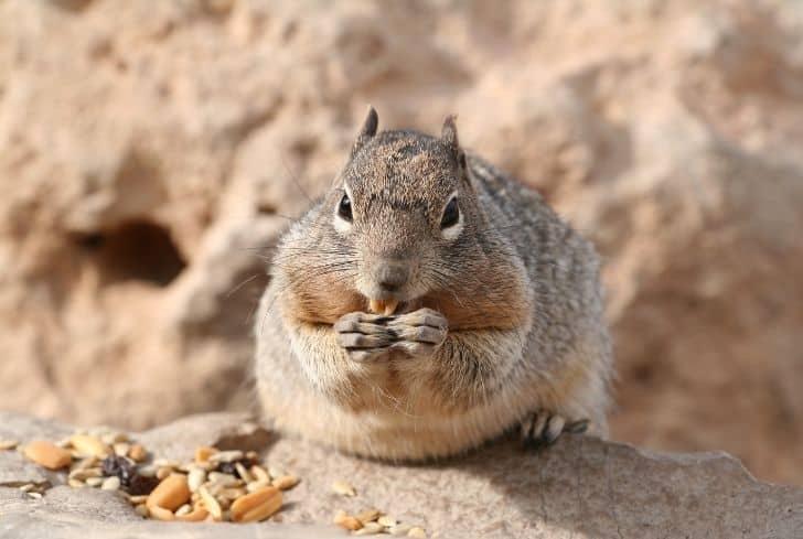 squirrel-eating-raisin