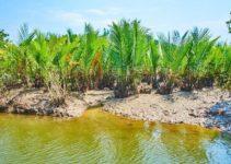How Do Rivers Make the Soil Fertile?